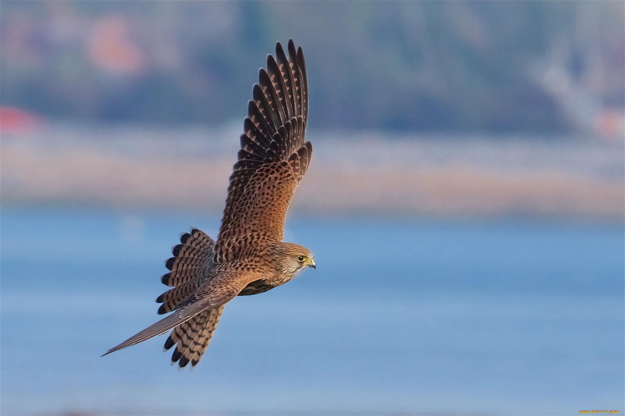 заставки каталог фотографии хищных птиц с названиями этом